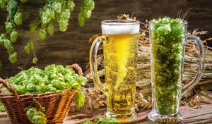 Можно ли пиво при беременности в первом, втором и третьем триместре? Безалкогольное пиво при беременности на ранних и поздних сроках